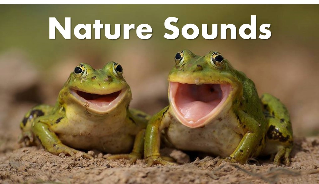 Nature Sounds Main Image